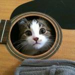gatto su chitarra